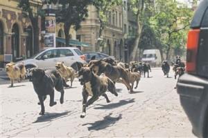 """Kõik """"Valges jumalas"""" mängivad koerad on segaverelised ning võetud koerte varjupaigast peredesse."""
