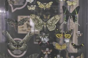Ööliblikate tiibade värvus ja muster pakuvad üllatavat vaatepilti.