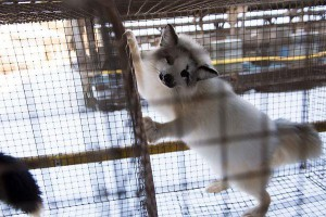 Üksikuid loomade väärkohtlemisjuhte peetakse vägivallaks, kuid loomade massilist tapmist suurtööstuses ei seostata vägivallaga.