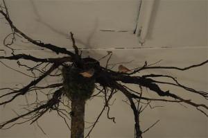 """Kadi-Maarja Võsu oli toonud ruumiinstallatsioonis """"... Must Follow Your Gravity"""" ehk """"Gravitatsioon on paratamatu"""" (2016) näituseruumi troopilised täpik-sebraamadiinid ning talvel maast välja kaevatud puu. Puu paiknes ruumis tagurpidi ja linnukestel tuli gravitatsioonist lähtuvalt luua endale uus õigetpidi maailm."""