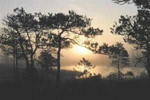 Maastik on eestlase identsuse üks kolmest alustoest. Ann Tenno fotod annavad loodusele omaetteoleku rahu ning intiimsuse, võimaluse temaga kontakteeruda ilma kellestki segamata.