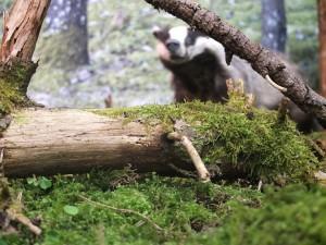 Vaprad ja ilusad. Foto - Kätlyn Metsmaa, Eesti Loodusmuuseum