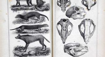 """""""Loomariik"""" (""""Le Règne Animal"""", 1817) on Prantsuse loodusteadlase Georges Cuvier' kuulsaim teos, mis võtab kokku tema uurimistöö – elusloomade ja fossiilsete organismide kirjeldused. Cuvier ei uskunud evolutsiooni, et eluvormid võiksid aja jooksul areneda. Tema kõige olulisemaks panuseks on liikide väljasuremise kui fakti põlistamine, kuivõrd sel ajal ei olnud veel laialdaselt aktsepteeritav mõte, et  kogu maailma looja jumal võiks lasta mingil osal oma kätetööst lihtsalt välja surra. Cuvier' arvates olid fossiilid pärit meile eelnevast maailmast, mis  mingi katastroofi tõttu hävinud oli. Pildil lehekülg raamatu esimesest ingliskeelset tõlkest."""