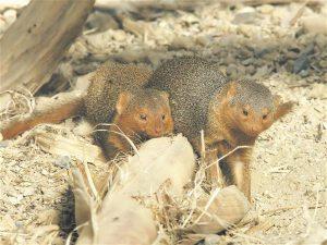 Haige kaaslase aitamine ei ole looduses väga laialt levinud, kuid näiteid siiski leidub. Näiteks mangustid puhastavad ja toidavad vigastatud kaaslast.