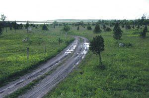 """Viimastel aastatel on riik Euroopa Liidu toel astunud hoogsamaid samme kinnikasvanud niidukoosluste taastamiseks ja hooldamiseks, et nende elurikkust säilitada. Nii on näiteks projekti """"Elu alvaritele"""" käigus Lääne-Eestis taastamisel 2500 hektarit liigirikkaid loopealseid, loodetavasti käivitatakse lähiajal ka Eesti niidukoosluste kroonijuveeli – puisniitude – taastamisprojekt. Pildil on vaade hiljuti taastatud loopealsele Koguva külas Muhumaal, mis veel mõned aastad tagasi oli kaetud tiheda kadakavõsaga. Foto: Aveliina Helm"""