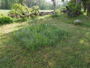 Igaühe looduskaitse on ka juba see, kui suurte murupindade asemel on aianurkades kasvukoht looduslikele taimeliikidele. Selliste laigukeste liigirikkust saab ise kasvatada, tuues aeda juurde meelepäraste taimede seemneid või istikuid.