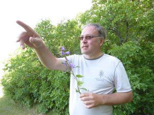 Toomas Kukk ja nõgeselehine kellukas ( Campanula trahelium).
