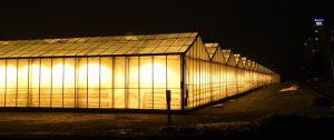 Eestis on linna põllumajandus nagu nelinurkne tuba. Ühes nurgas asuvad suurte kasvuhoonetega ettevõtted,  kelle tooteid müüakse valdavalt ketipoodides. Pildil Luunja kasvuhooned Tartu linna piiril.