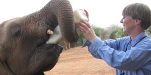 """Lisa Kemmerer: """"Loomaõigusluse lähteemotsioon on empaatia. Me tahame aidata loomi, mitte haavata inimesi."""""""